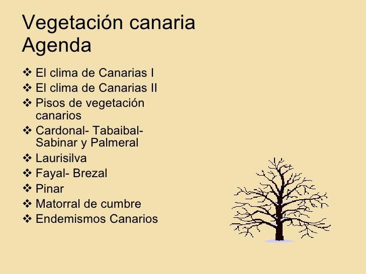 VegetacióN Canaria Slide 2