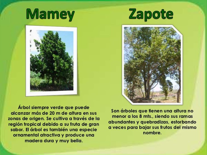 Vegetaci n y fauna for Los arboles y sus caracteristicas