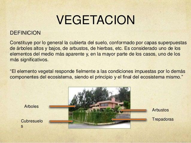 Vegetacion azoteas verdes muros verdes huertos urbanos for Muros verdes definicion
