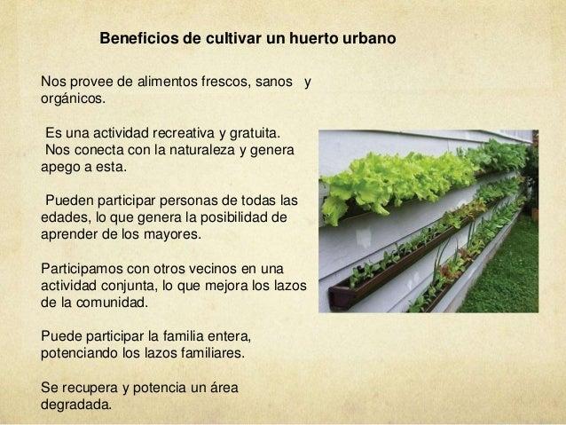 Vegetacion azoteas verdes muros verdes huertos urbanos for Muros verdes beneficios