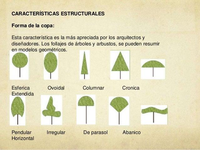 Vegetacion azoteas verdes muros verdes huertos urbanos for Tipos de arboles y caracteristicas