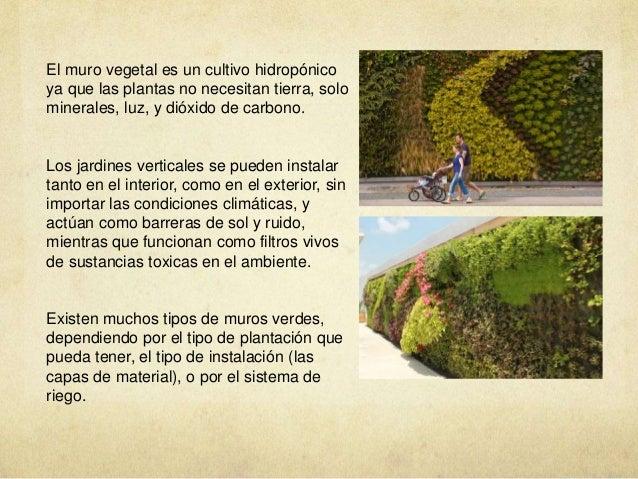 vegetacion azoteas verdes muros verdes huertos urbanos On para que sirve un muro verde