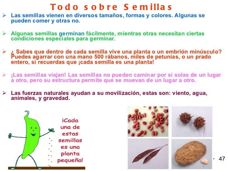 Vegetales - Informacion sobre la fibra vegetal ...