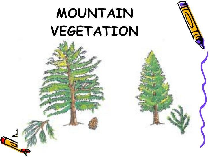 mountain vegetation in india