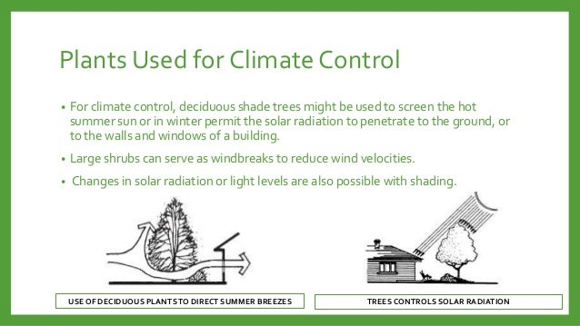 Plants Used for Climate Control •  For climate control, deciduous shade trees might be used to screen the hot summer sun o...
