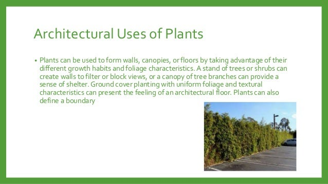 Architectural Uses of Plants •  Plants can be used to form walls, canopies, or floors by taking advantage of their differe...