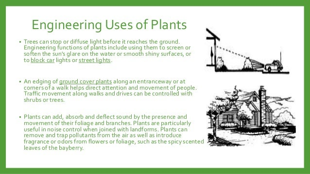 Engineering Uses of Plants •  Trees can stop or diffuse light before it reaches the ground. Engineering functions of plant...
