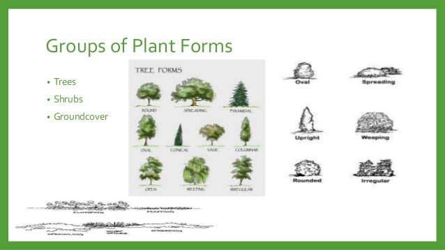 Functional Uses Of Plants In Landscape Design