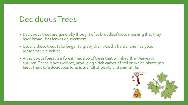 deciduous trees deciduous trees are generally thought of as broadleaf