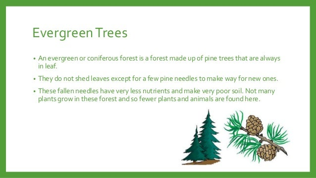 Evergreen Trees •  An evergreen or coniferous forest is a forest made up of pine trees that are always in leaf.  •  They d...