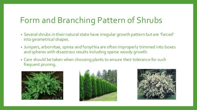 Form and Branching Pattern of Shrubs •  Several shrubs in their natural state have irregular growth pattern but are 'force...