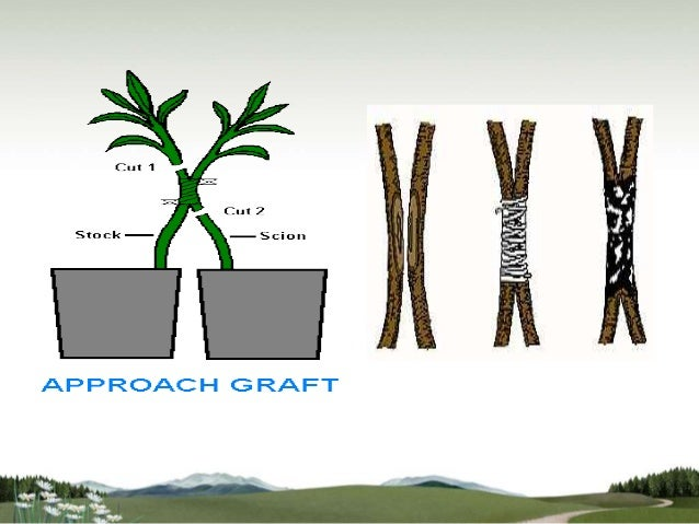 I m just asexual propagation