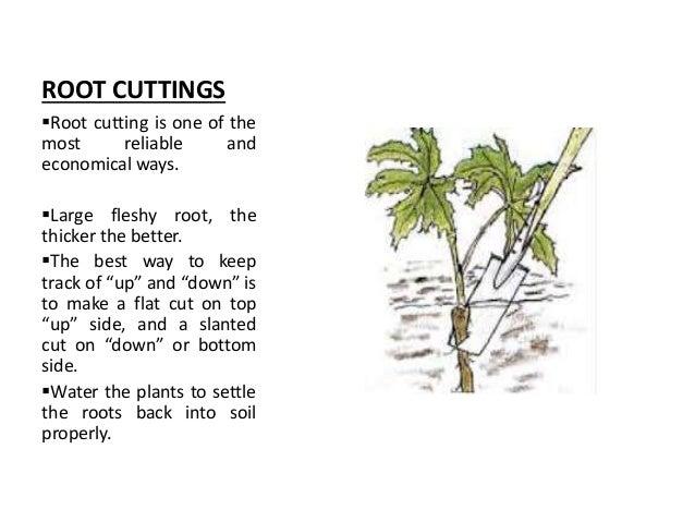 vegetative propagation in plants pdf