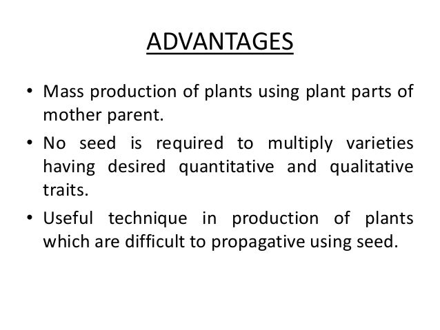 Advantages of asexual reproduction propagation meaning