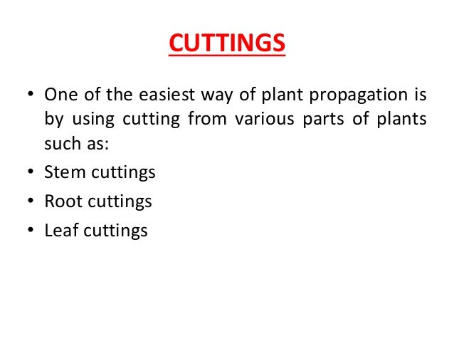 Asexual propagation ppt background
