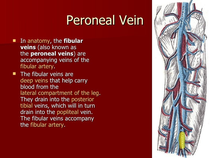 Vein of lower limb