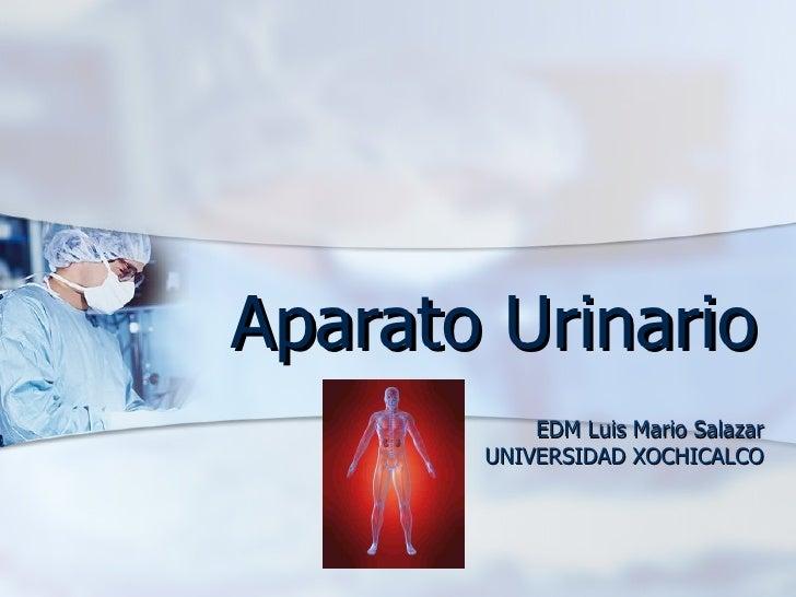 Aparato Urinario EDM Luis Mario Salazar UNIVERSIDAD XOCHICALCO