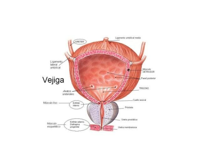 El cancer de prostata es curable yahoo dating 9