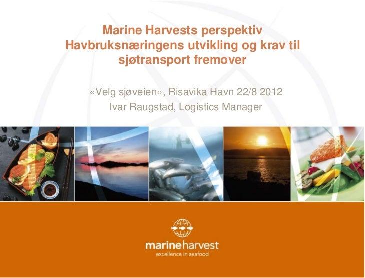 Marine Harvests perspektivHavbruksnæringens utvikling og krav til        sjøtransport fremover    «Velg sjøveien», Risavik...