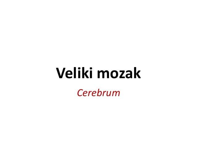 Veliki mozak Cerebrum