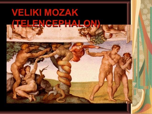 VELIKI MOZAKVELIKI MOZAK (TELENCEPHALON)(TELENCEPHALON)
