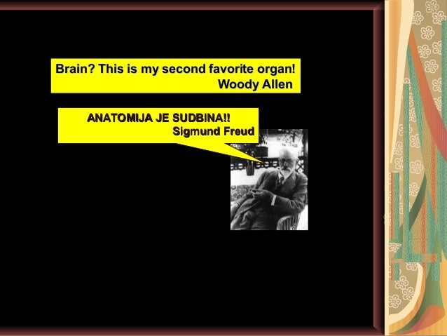 Anatomija- Veliki mozak  Slide 2