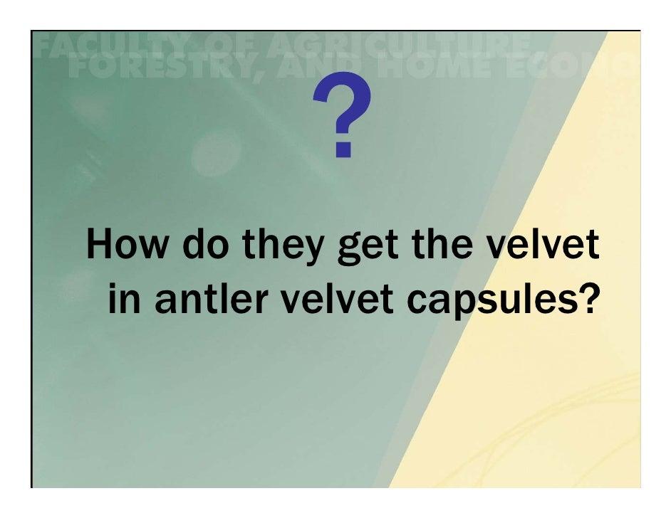 How do they get the velvet in antler velvet capsules?