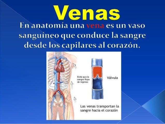    Generalmente, las venas se caracterizan    porque contienen sangre desoxigenada    (que se re oxigena a su paso por lo...