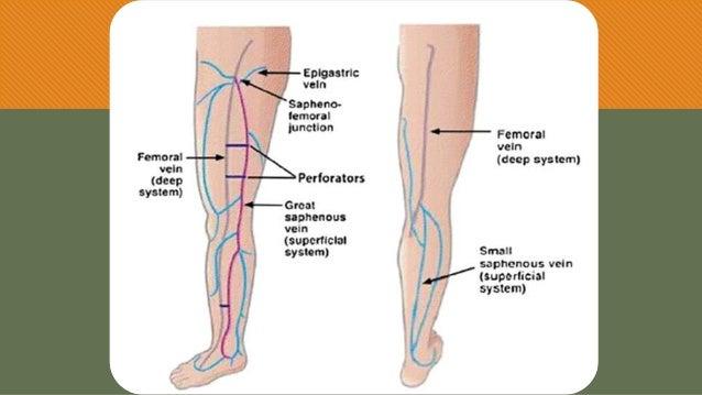 Anatomía sistémica - Venas del miembro inferior