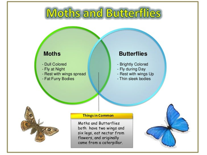 Moths                                    Butterflies- Dull Colored                           - Brightly Colored- Fly at Ni...