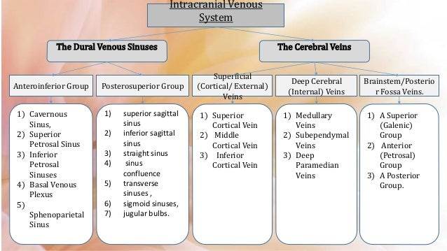 Radiologic Venous Anatomy Of Brain