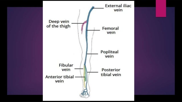 Venous and lymphatic drainage of lower limb