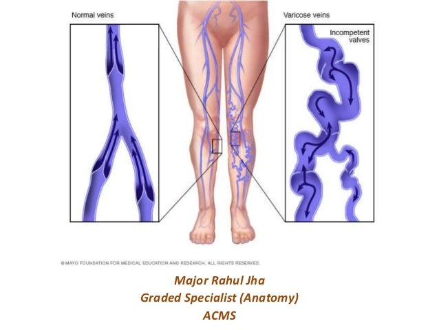 Venous lymphatic drainage of lower limb