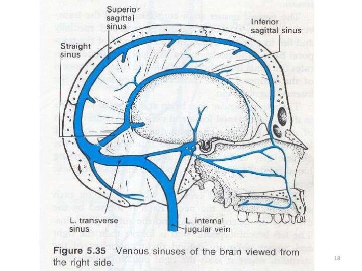Venous Sinuses