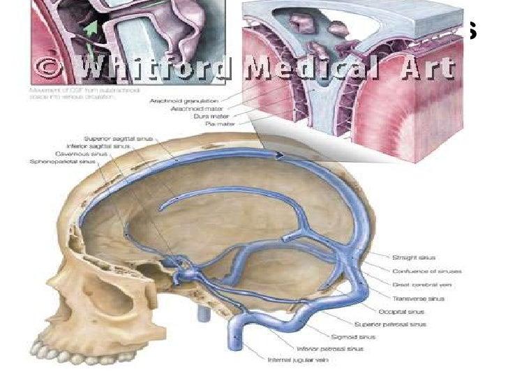 cerebral venous sinuses