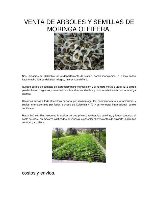 VENTA DE ARBOLES Y SEMILLAS DE MORINGA OLEIFERA.  Nos ubicamos en Colombia, en el departamento de Nariño, donde manejamos ...