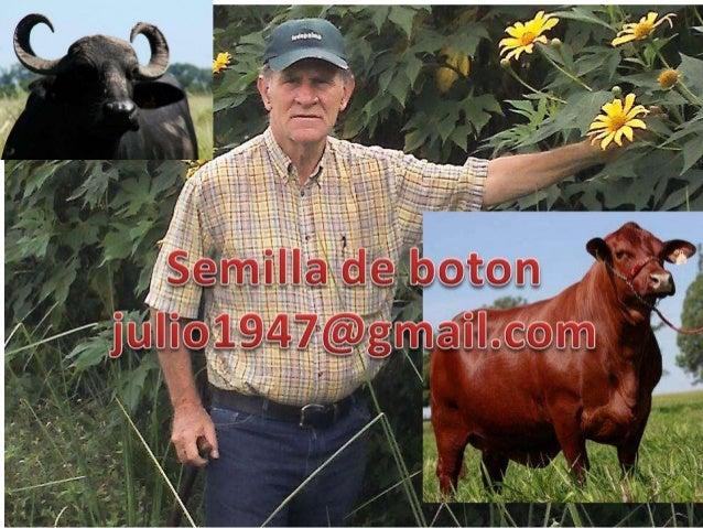 VENTA DE BUFALOSJULIO1947@GMAIL.COM