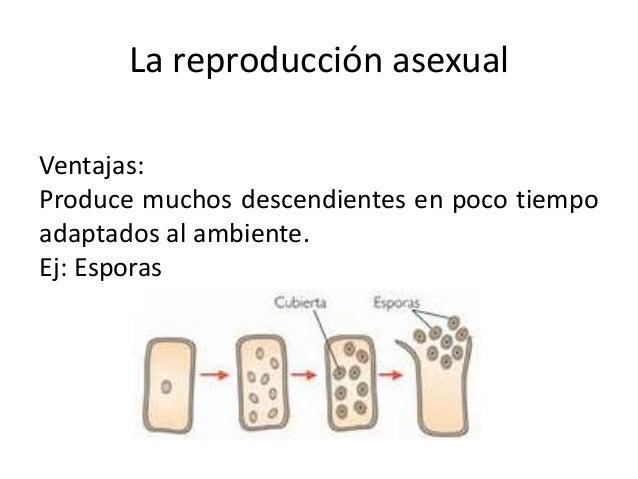 Reproduccion asexual y sexsual pdf