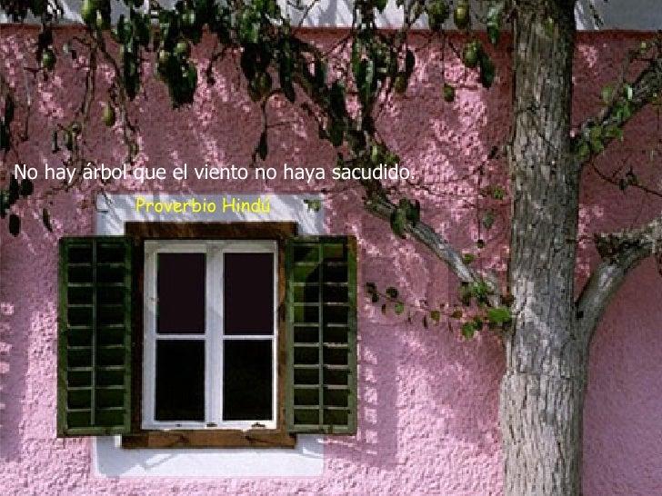No hay árbol que el viento no haya sacudido.   Proverbio Hindú