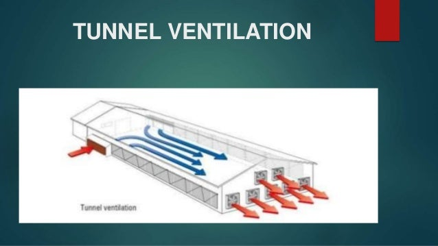 Ventilatiion Systems In Environmentallycontrolled Poultry