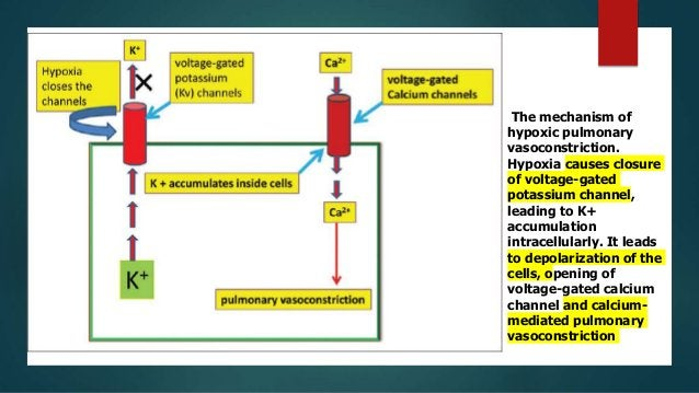 Other factors  Inhibition:  Trauma, vasodialator drugs( nitroprusside, nitroglycerin, nitric oxide, isoprenaline).  Vas...