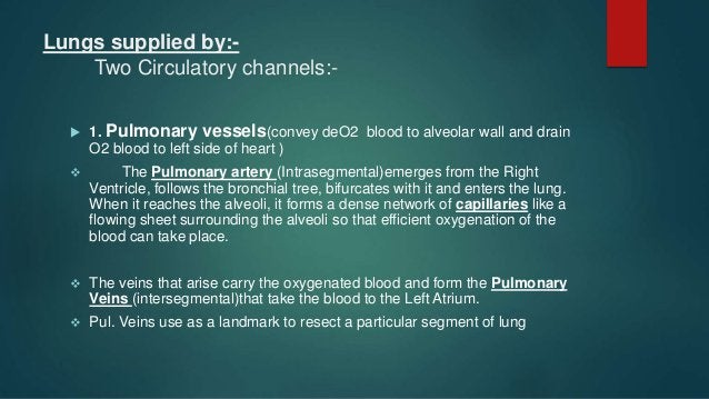 LUNG RECEIVES 2 BLOOD SUPPLIES From the Left Ventricle BRONCHIAL ARTERIES Carry oxygenated blood Blood supplied to the con...