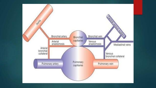  Normal alveolar ventilation(VA)=4lit/min  Normal total perfusion=5lit/min.  V/Q=0.8   At the base of lung .Blood Flo...