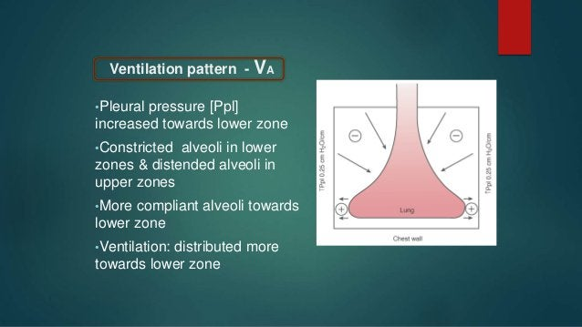 ZONE-I: Only exist if Ppa very low in hypovolemia / PA in PEEP ZONE-II: Perfusion α Ppa-PA arterial-alveolar gradient ZONE...