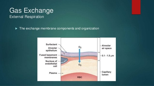 Gas Exchange Hypoxia Problems 2. Interference with alveolar capillary exchange  Alveolar air is normal but the exchange i...