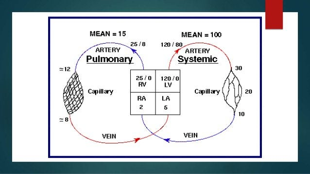  HYPOXIC pulmonary vasoconstriction (HPV) is a reflex contraction of vascular smooth muscle small pulmonary arteries in t...