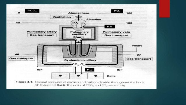 INTRODUCTION TO PHSYIOLOGY OF CO2 TRANSPORT • end-product of aerobic metabolism. – production averages 200 ml/min in resti...