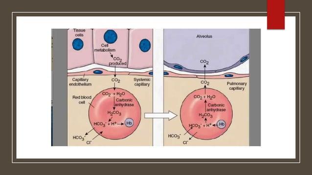  Hb : Anaemic Hypoxia  O2 saturation : Hypoxic Hypoxia  Cardiac output : Stagnant Hypoxia Three factors can decrease O2...