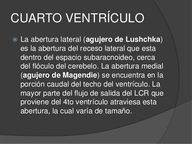 LCR  Es un líquido de color transparente, que baña el encéfalo y la M.E.  Circula por el espacio subaracnoideo, los vent...