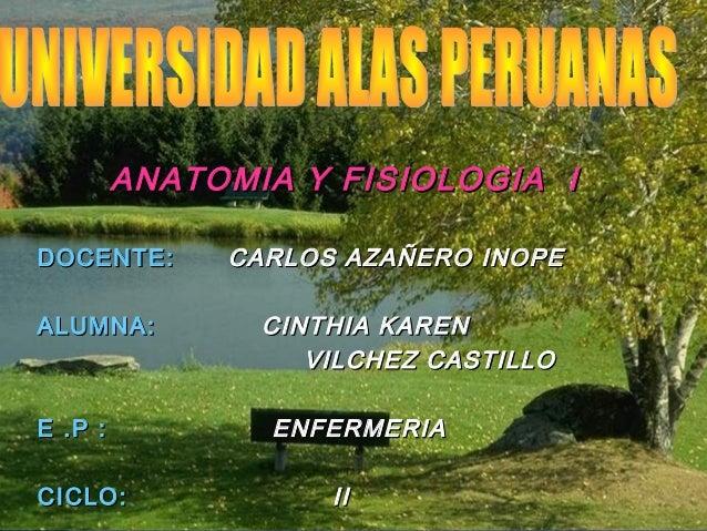 ANATOMIA Y FISIOLOGIA IDOCENTE:      CARLOS AZAÑERO INOPEALUMNA:         CINTHIA KAREN                   VILCHEZ CASTILLOE...